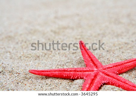 Red starfish on a sand beach background