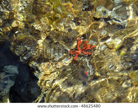 red starfish on rocks under sea surface