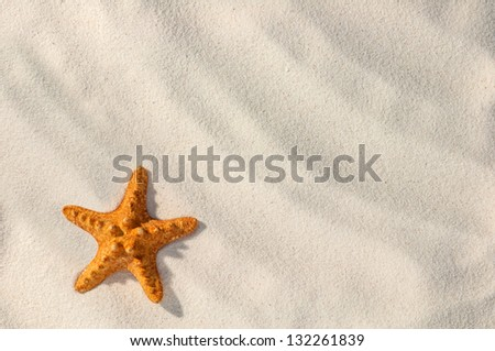 red starfish on sand close up