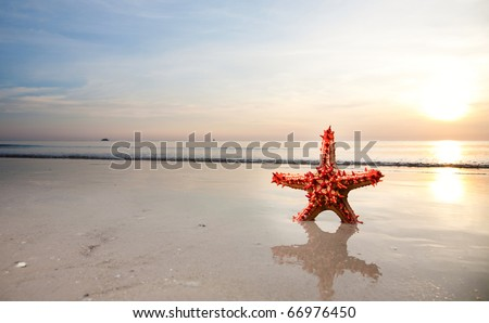 Red Starfish on the beachfront - stock photo