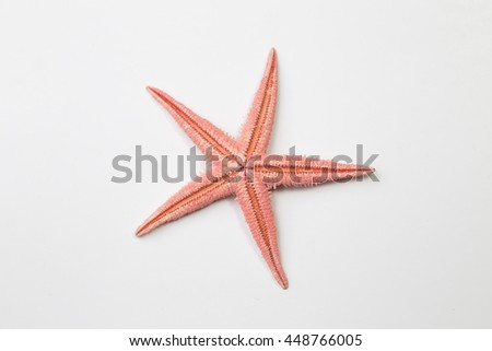 Red starfish or sea star on white background, top view - stock photo