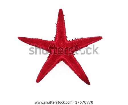Red Starfish Top Isolated Over White