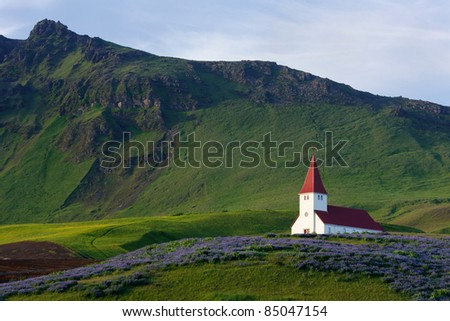 Red-steepled church surrounded by alpine lupin in the town of Vik in Iceland - stock photo