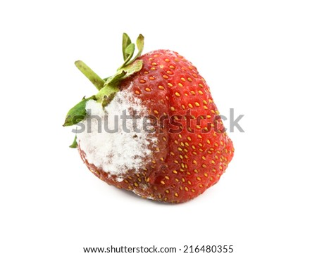 Red strawberry with a patch of mould, isolated on a white background - stock photo