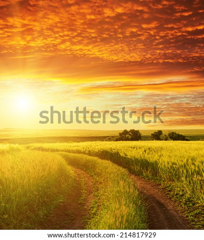 red sunset and road in green field