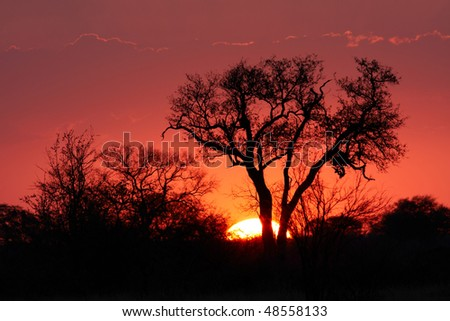 Red sunset in a nature reserve with tree silhouette