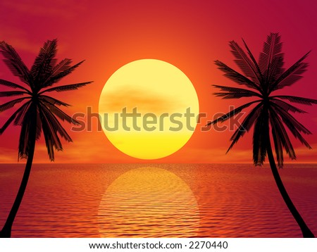 Red Sunset & Palm