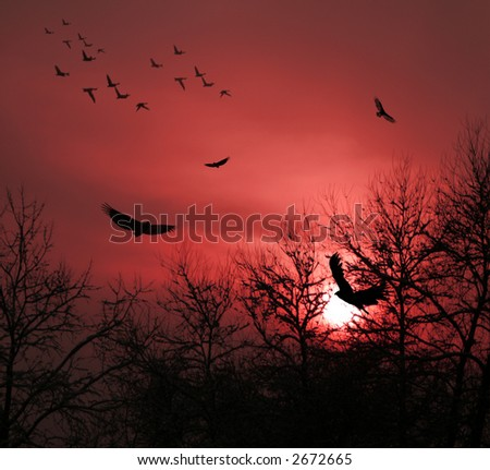 Red Sunset with Birds and Trees silhouette.