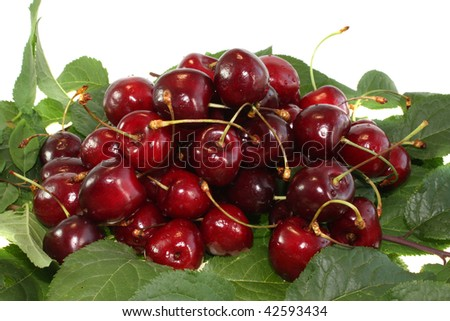 Red sweet cherry on leaves on a white background, it is isolated.