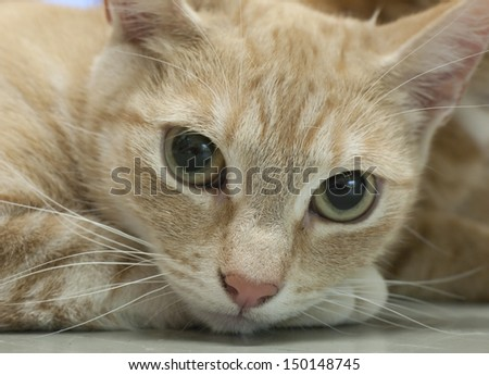 Red tabby cat looking at camera - stock photo