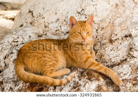 red tabby cat on a tree stump - stock photo