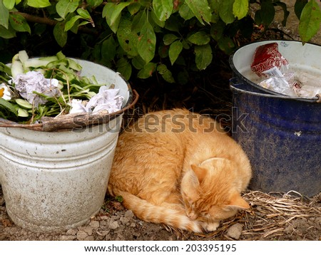 red tabby cat resting between two buckets of garbage - stock photo