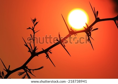 Red Thorn - African Sunset Background - Abstract Art and Colorful Nature