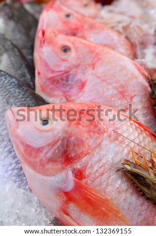 Red tilapia on ice - stock photo