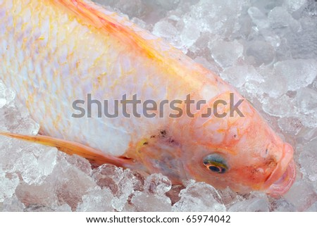 Red tilapia on iced. - stock photo