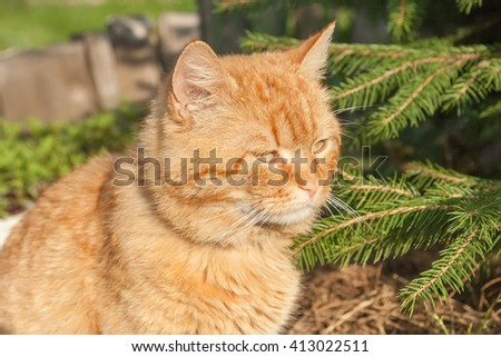 red tired cat sitting near tree in forest. - stock photo