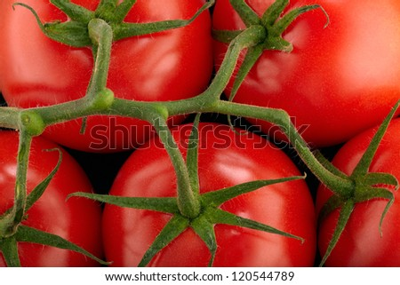 Red tomatoes branch - stock photo