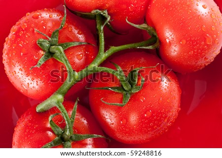 Red tomatoes on red plate with water drops - stock photo
