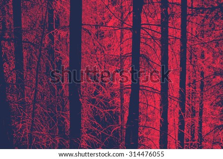 Red Toned Image of Bare Tree Trunks in Evergreen Forest with Eerie Mood, Ideal for Backgrounds - stock photo