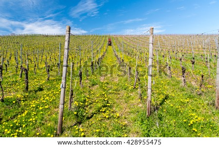 Red tractor working in German winery prepare for the harvest season - stock photo