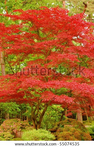 red tree against green background - stock photo
