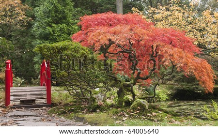 red trees in japanese garden-fall - stock photo