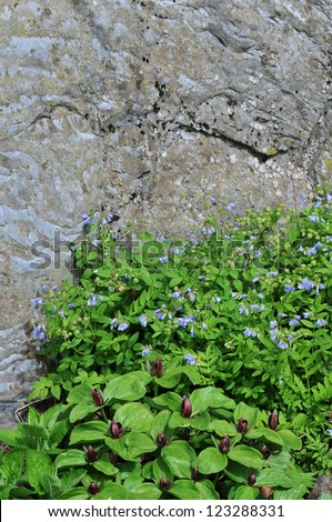 Red Trillium and Jacob's Ladder with Stone Background Vertical With Copy Space - stock photo