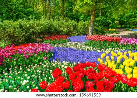 Red tulip garden or field in spring background, pattern or texture - stock photo