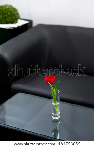 Red tulip in the vase in room with black sofa - stock photo