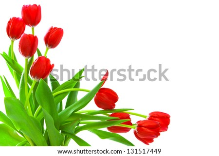 Red tulips bouquet isolated on white.