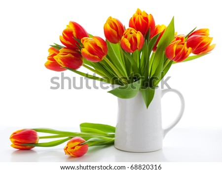 red tulips in a jug on white background - stock photo