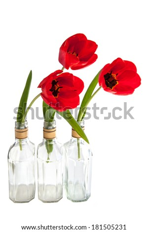 Red tulips in the glass on a white background - stock photo