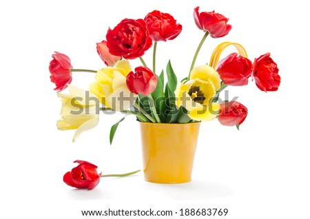 Red tulips in yellow flowerpot on white background