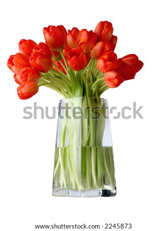 red tulips on a vase - stock photo