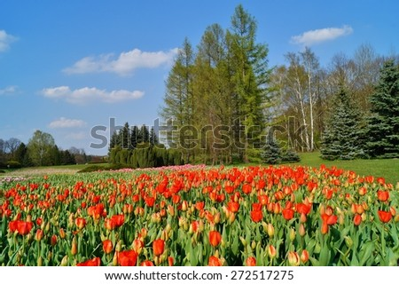 red tulips on the pond, spring - stock photo