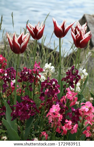 red tulips with multicolored garden flowers on lake background, selective focus, vertical image - stock photo