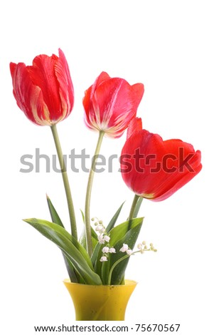 Red tulips with water droplets in a vase on white - stock photo