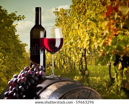 red vine with vineyard - stock photo