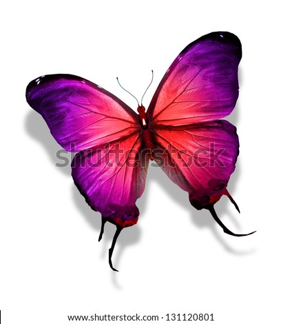 Red Violet Butterfly Isolated On White Stock Illustration ...