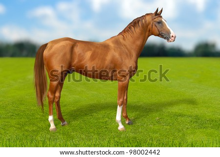 Red warmbllood horse on  summer green grass against blue sky with coulds, nature background. Collage. Illustration - stock photo