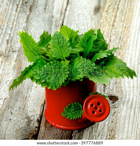 Red Watering Can with Fresh Green Lemon Balm Leafs isolated on Rustic Wooden background - stock photo