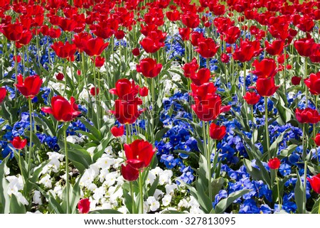 Red, White and Blue Flowers - stock photo