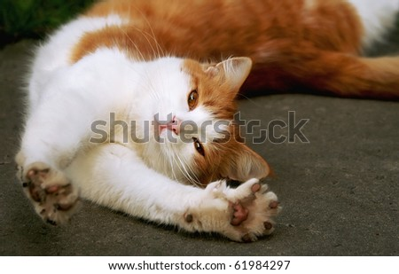 red - white cat stretches on gray asphalt - stock photo