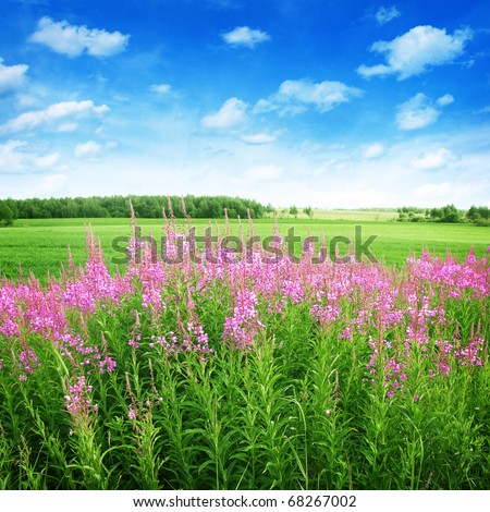 Red wildflowers in the field under blue sky. - stock photo