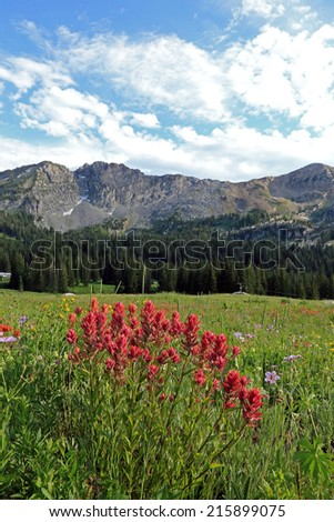 Red wildflowers in the Wasatch Mountains, Utah, USA. - stock photo