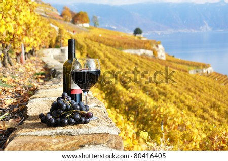 Red wine and grapes on the terrace vineyard in Lavaux region, Switzerland