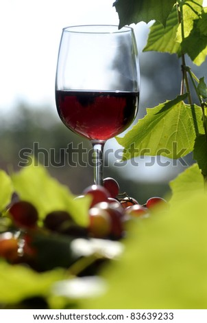 red wine glasses with grape - stock photo