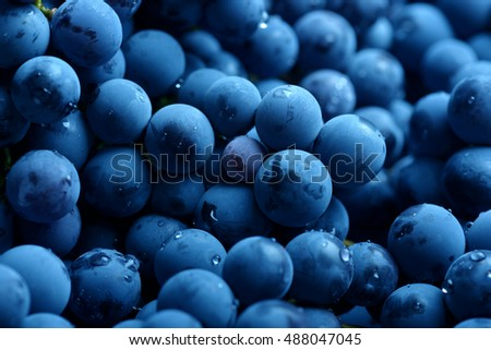 Red wine grape. Dark grapes background.