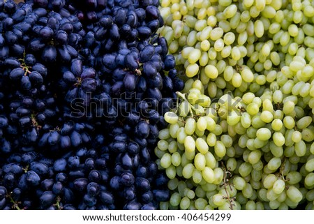 Red wine grapes background/ dark grapes, blue grapes , Red Grape , Vitis vinifera L. , VITACEAE , Cardinal Grape , Emperor Grape - stock photo