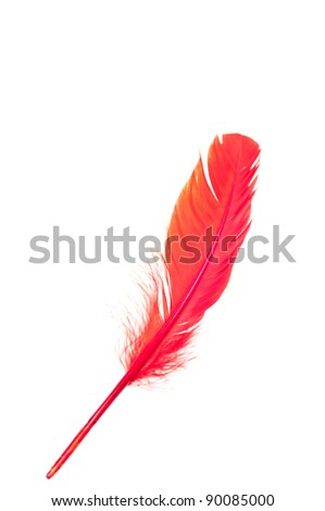 Red wing feather isolated on white background - stock photo